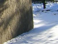 Проведение облицовки зимой требует специальных знаний, навыков и оборудования